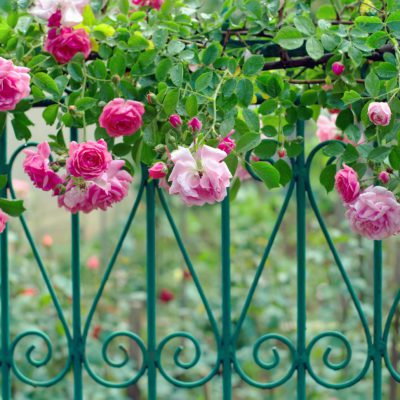 ガーデニングフェンス&植物で住まいをおしゃれに彩る方法