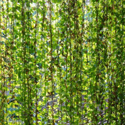 エコで楽しい自然のエクステリア。「グリーンカーテン」で真夏を乗り切ろう